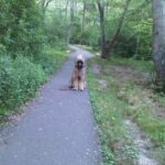 Dog sitting on a paved path in the woods