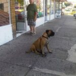 Dog sitting on sidewalk in front of a store