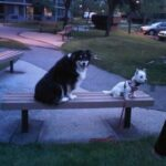 Two dogs sitting next to each other on a park bench